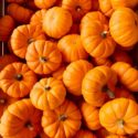What can I make with Pumpkin?